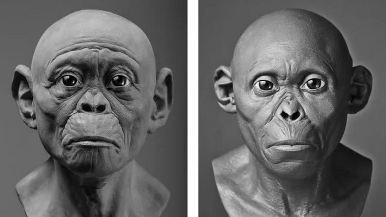SN: Изображения ископаемых предков человека гоминид оказались неправильными