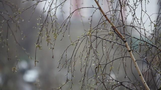 27 апреля в Ивановской области ожидается дождь и порывистый ветер