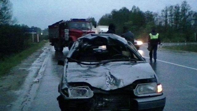 На трассе Иваново - Родники водитель сбил лося
