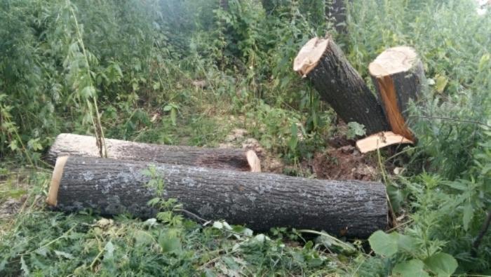Сильный ветер в Иванове